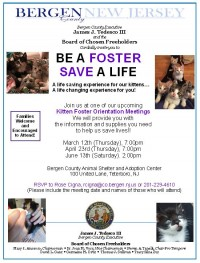 Kitten Foster Program Orientation Meetings: April 23, June 13